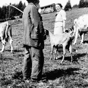Oskar Zipfel, Viehhirt vom Grünen Baum - 1930 - 1936